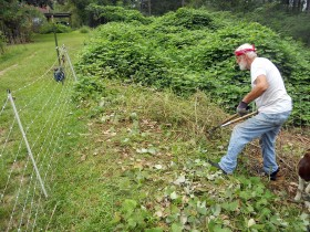 Fred clipping Kudzu vines
