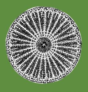 Diatom, fossilized algae that makes up diatomaceous eart