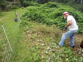 Fred clipping Kudzu vines