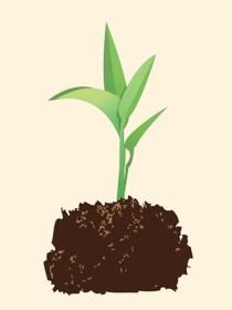 Image of seedling |