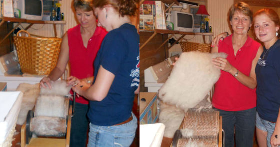 Carding wool at Golden Acres Ranch